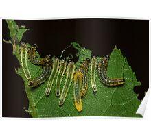 Caterpillar Gems Poster