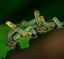 Twerkapillars  by Symbiosis - Justin Brosey