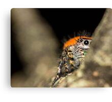 Peek-A-Boo Spider Canvas Print