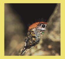 Peek-A-Boo Spider Baby Tee