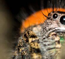 Peek-A-Boo Spider Sticker