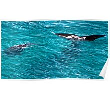 Whale's Tail Poster