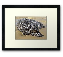 Mussels At The Cove Framed Print