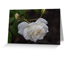 White Rose With Raindrops Greeting Card