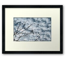 Kingfishers and Helicopters Framed Print