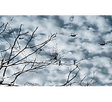 Kingfishers and Helicopters Photographic Print