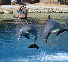Dolphin Magic by KeepsakesPhotography Michael Rowley
