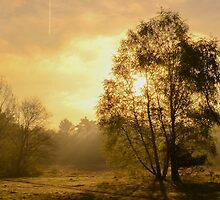 Morning by Joey Kuipers