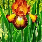 Spreckles Iris by Susan Savad