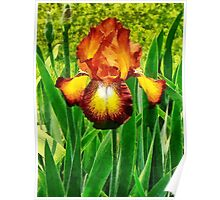Spreckles Iris Poster