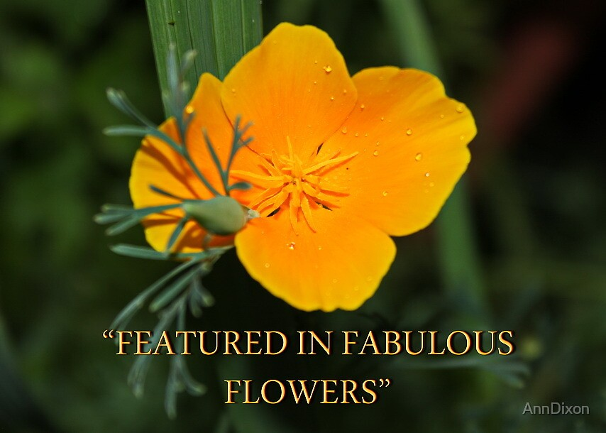 Banner - Fabulous Flowers Group by AnnDixon