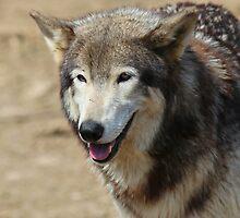 Wolf II by virtualdiablo