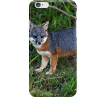 Channel Island Fox only found one place in the world iPhone Case/Skin