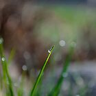 Morning dew by Mark Williams