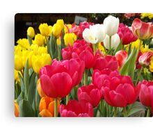 Colorful Tulips, Union Square, New York City Canvas Print