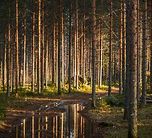 Sunset forest by macsphotography