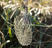 the web by Anne Scantlebury