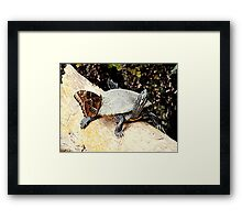 Hitchhiker. Framed Print