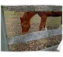 Chester Springs Horse       1658 Poster