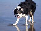 Laddie the Beach Boy. by Michael Haslam
