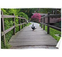 Waddle Your Way Back Home  Poster