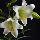 Easter Lillies by Poete100