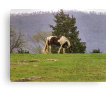 Grazing Horse Canvas Print