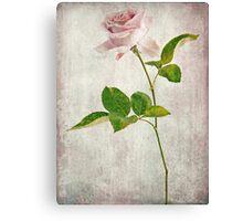 Shabby Chic English Tea Rose  Canvas Print