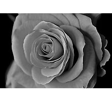 Black and White Rose At Night Photographic Print