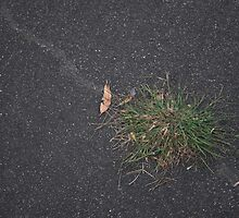 For The Groundsman.  by Raymond J. Marcon