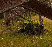 Fern And Bridge. by Raymond J. Marcon