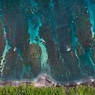 Olowalu Reef by Zach Pezzillo