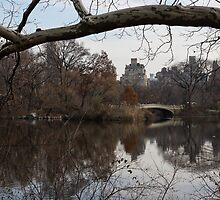 Bows and Arches - New York City Central Park by Georgia Mizuleva