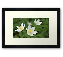 Macro photography of white flowers Framed Print