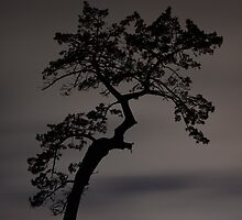 Tree Silhouette  by Vince Lovrich