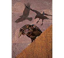 Crow invasion 2 Photographic Print