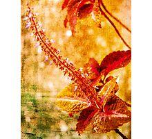 Big Red Stamen Photographic Print