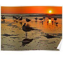 Sunrise Bird on IOP Poster