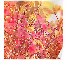 Cherry Blossom Canopy Watercolor Poster