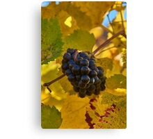 The raw material Canvas Print