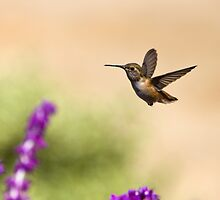Hummingbird frozen in flight by damhotpepper