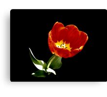 Tulip on Black Canvas Print