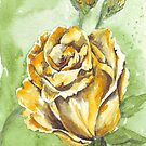 Rose of friendship by Maree Clarkson