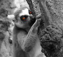 The Lemur and His Bark by Tabatha Thistleton