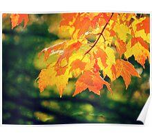 Pretty Autumn Colors 3 Poster