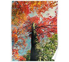 Pretty Autumn Colors 4 Poster