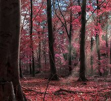 Fairytale Pink Woodland by Joe Kirby