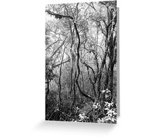 Rainforest No.8 Greeting Card
