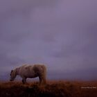 Dartmoor Pony on a very foggy day by Charmiene Maxwell-batten