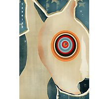 the bull terrier  Photographic Print